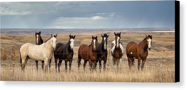 Rt 1806 Canvas Print featuring the photograph Seven Horses On The Range Pan by Abby Krim