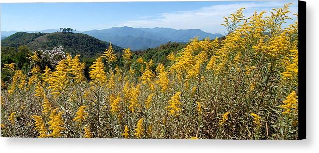 Mountain View Canvas Print featuring the photograph Goldenrod Mountain View by Alan Lenk