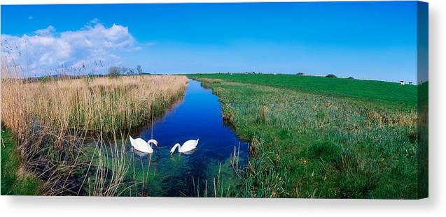 Birds Canvas Print featuring the photograph Swans On Bog, Near Newcastle, Co by The Irish Image Collection