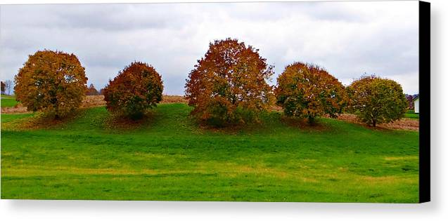 Autumn Canvas Print featuring the photograph Fall Tree Line by Brenda Conrad
