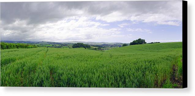England Canvas Print featuring the photograph Quontoxhead Grains by Jan W Faul
