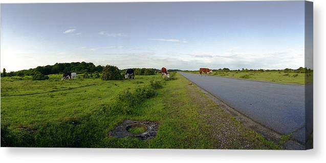 Raf Canvas Print featuring the photograph Runway Light With Cows by Jan W Faul