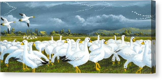 Geese Canvas Print featuring the painting Snow Geese Gathering by Bob Patterson