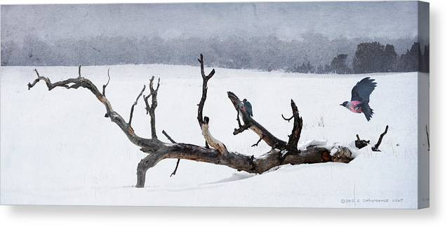 Birds Canvas Print featuring the painting Letting Go - Lewis Woodpeckers by R christopher Vest