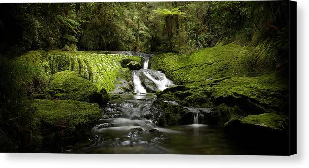 Tree Ferns Canvas Print featuring the photograph Green Cascade by Peter Prue