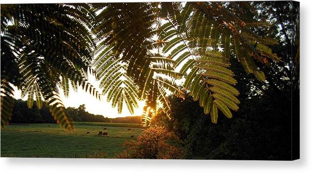 Trees Canvas Print featuring the photograph Pasture At Sunrise by Caroline Eve Urbania