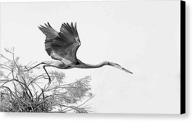 Canvas Print featuring the photograph On The Wing by Joseph Reilly