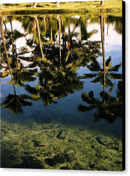 Palms Canvas Print featuring the photograph Reflected Palms by Michael Lewis