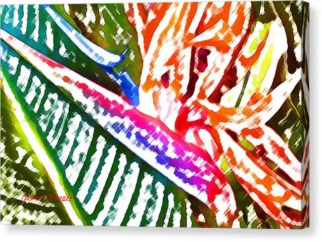 Bird Of Paradise Canvas Print featuring the digital art Bird of Paradise Painted by James Temple