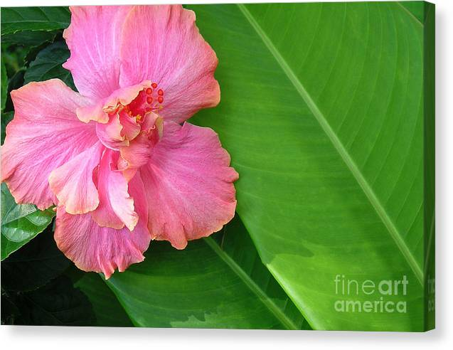 Hawaii Iphone Cases Canvas Print featuring the photograph Favorite Flower 2 by James Temple