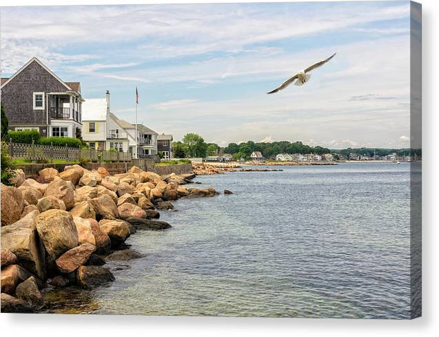 Black Point Seagull by Marianne Campolongo