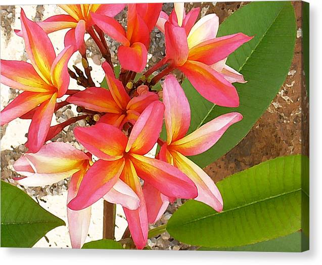 Hawaii Iphone Cases Canvas Print featuring the photograph Plantation Plumeria by James Temple