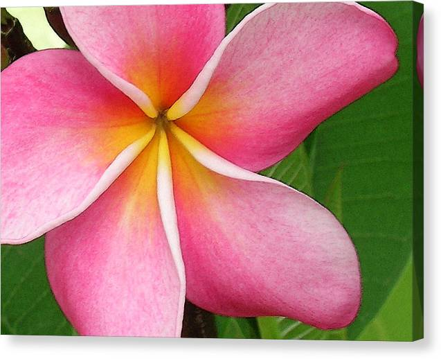 Hawaii Iphone Cases Canvas Print featuring the photograph April Plumeria by James Temple