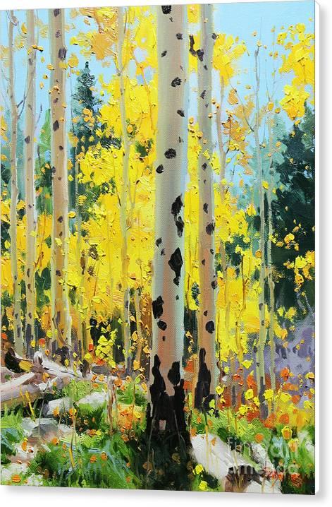 Aspens in Golden Light by Gary Kim