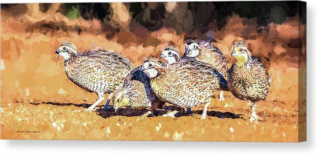 Northern Bobwhite Canvas Print featuring the digital art Northern Bobwhite Digital Art by Carol Fox Henrichs