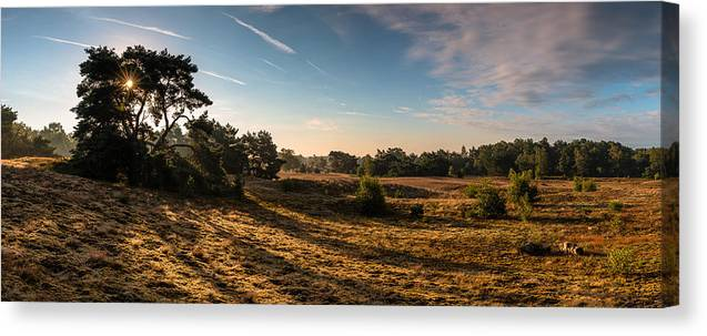 Scenics Canvas Print featuring the photograph Panorama - Sunrise Bergerheide by William Mevissen