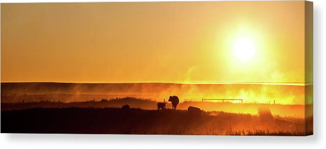 Scenics Canvas Print featuring the photograph Cattle Silhouette Panorama by Imaginegolf