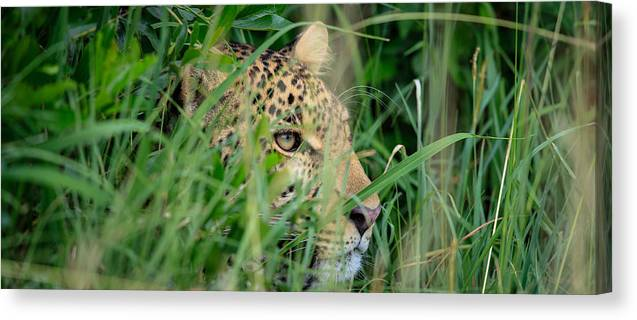 Kenya Canvas Print featuring the photograph The Watcher by Denis Charles