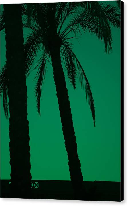 Palm Canvas Print featuring the photograph Palm Trees And Emerald Sky. by Ingela Christina Rahm