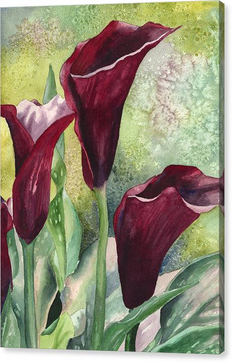 Three Callas by Anne Gifford