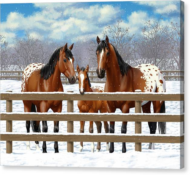 Limited Time Promotion: Bay Appaloosa Horses In Snow Stretched Canvas Print