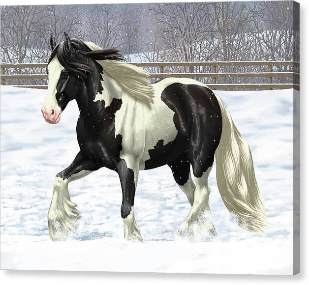 Limited Time Promotion: Black Pinto Gypsy Vanner In Snow Stretched Canvas Print