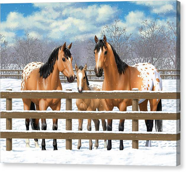 Limited Time Promotion: Buckskin Appaloosa Horses In Snow Stretched Canvas Print