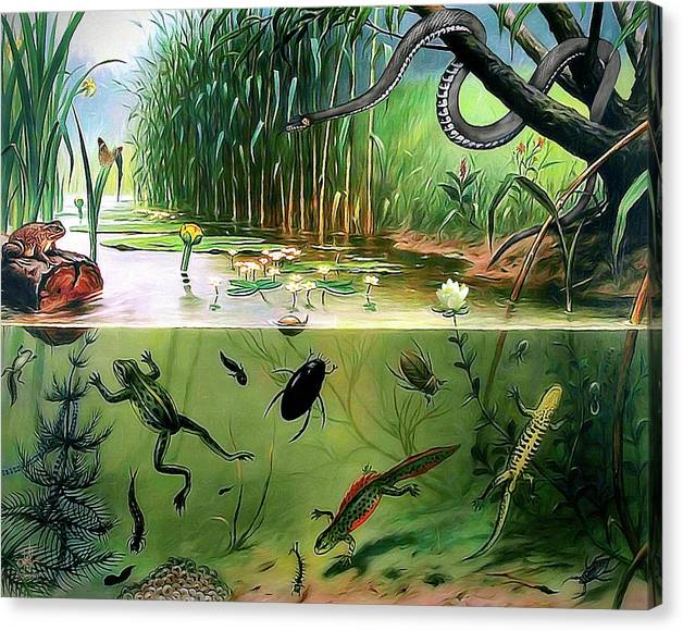 Limited Time Promotion: Pond Life Stretched Canvas Print by Pennie McCracken - Endless Skys