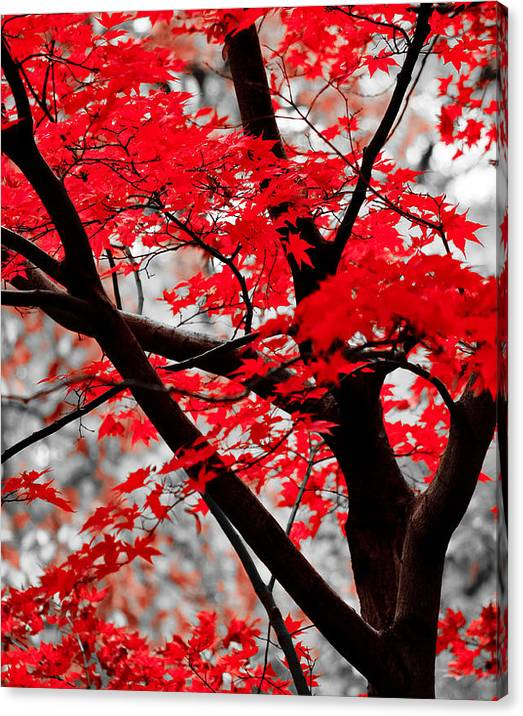 Limited Time Promotion: Last Fall Colors Stretched Canvas Print