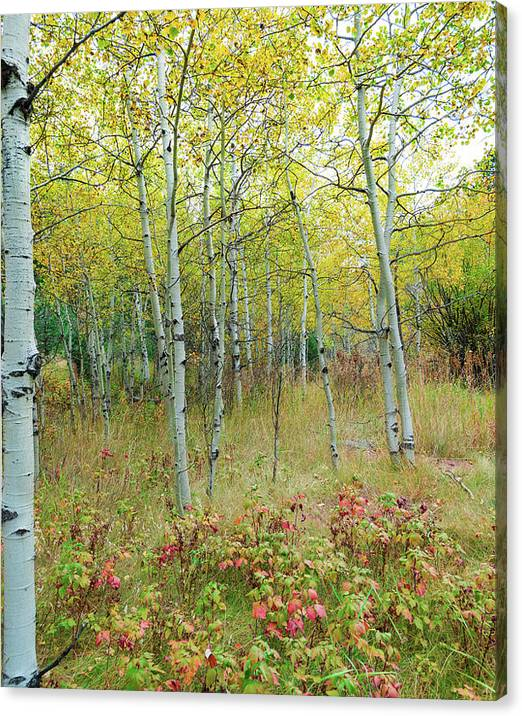 Limited Time Promotion: Autumn Forest Delight Portrait Stretched Canvas Print by James BO Insogna