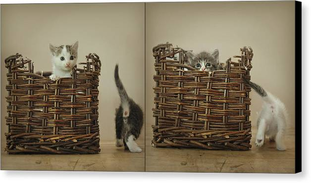 Kittens Canvas Print featuring the photograph Exchange by Inesa Kayuta