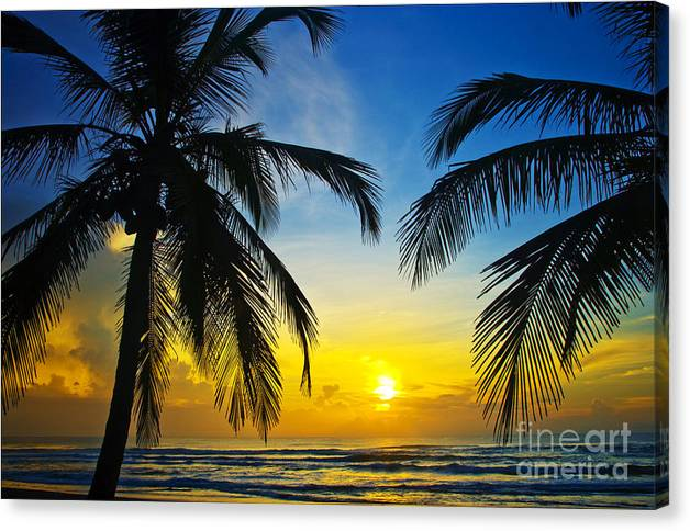Palm Tree Canvas Print featuring the photograph On The Edge by Thomas Levine