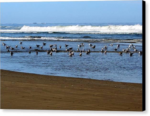Sea Shore Canvas Print featuring the photograph Oregon Coast Seabirds by Ed Mosier