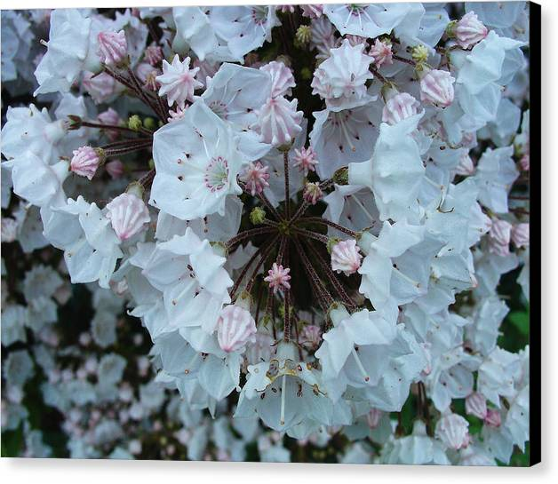 Floral Greeting Cards Canvas Print featuring the photograph When A Dozen Simply Won't Do by Terrance DePietro