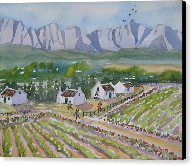 Vineyards And Farm Workers Cottages Canvas Print featuring the painting Helderberg Wine Estate by Heidi Brummer