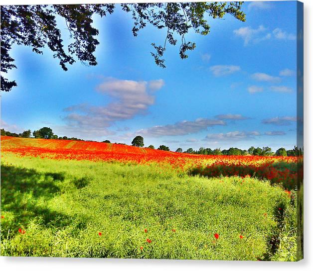 Poppy Field Canvas Print featuring the photograph Poppy Field by Sitara Bruns