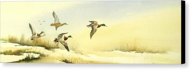 Mallard Ducks Canvas Print featuring the painting Flying Over by Lynne Parker