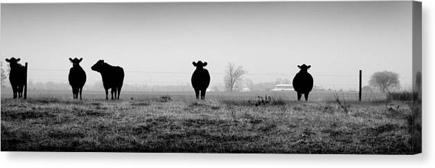 Kentucky Canvas Print featuring the photograph Kentucky Cows by Todd Fox