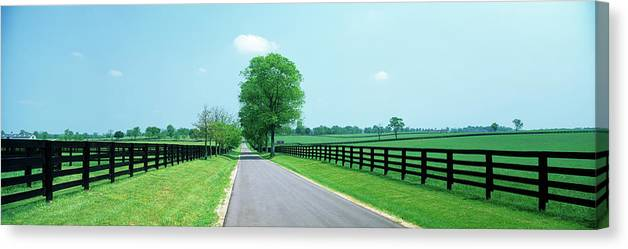 Photography Canvas Print featuring the photograph Road Passing Through Horse Farms by Panoramic Images