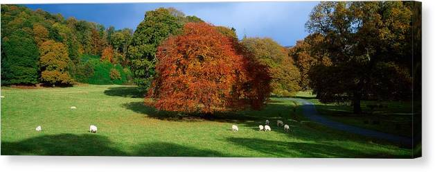 Autumn Canvas Print featuring the photograph Beech Tree, Glendalough, Co Wicklow by The Irish Image Collection