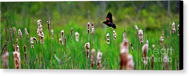 Sun Canvas Print featuring the photograph Flying Amongst Cattails by James F Towne