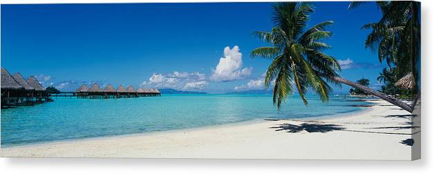 Photography Canvas Print featuring the photograph Palm Tree On The Beach, Moana Beach by Panoramic Images