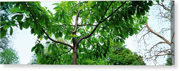 Photography Canvas Print featuring the photograph Trees In A Park, Adams Park, Wheaton by Panoramic Images