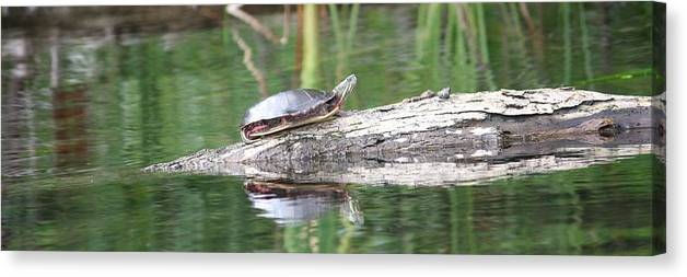Outdoors Canvas Print featuring the photograph Basking In The Sun by Sue Chisholm