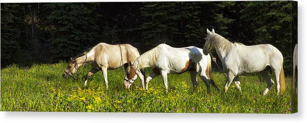Horse Canvas Print featuring the photograph Horses Among Wildflowers by Belinda Greb