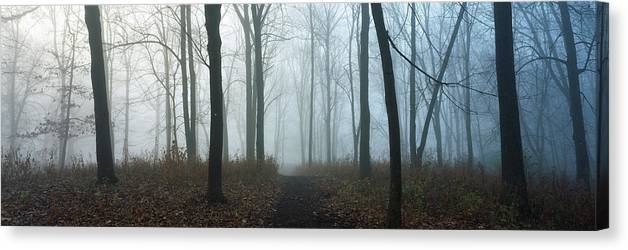 Photography Canvas Print featuring the photograph Trees During Autumn In Forest, Dupage by Panoramic Images