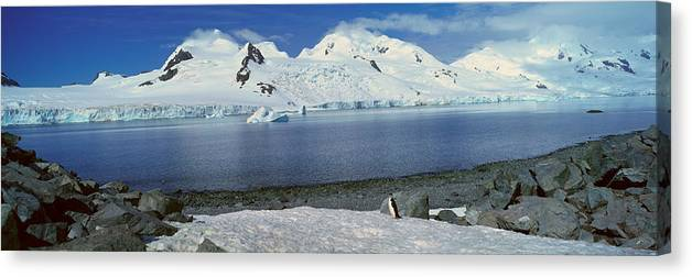 Photography Canvas Print featuring the photograph Panoramic View Of Chinstrap Penguin by Panoramic Images