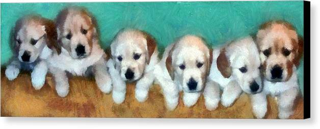Golden Retriever Canvas Print featuring the photograph Golden Puppies by Michelle Calkins