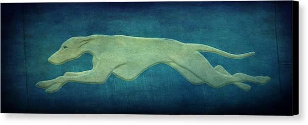 Greyhound Canvas Print featuring the photograph Greyhound by Sandy Keeton