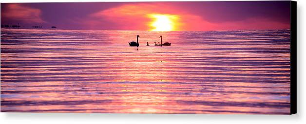 Swans Canvas Print featuring the photograph Swans On The Lake by Jon Neidert